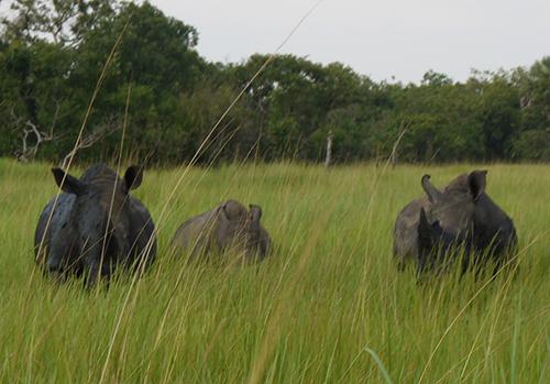 oconnor-rhino-trek-11