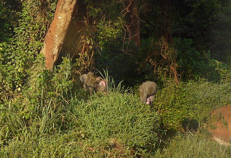 oconnor-baboons-5-750